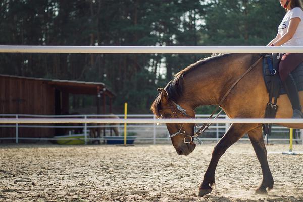 Zakupy jeździeckie online
